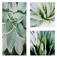 Kiera Grace Porta Succulent Wall Art 3-piece Set