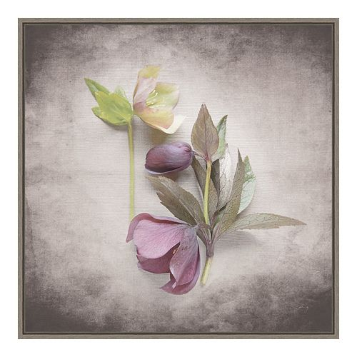 Amanti Art Vintage Hellebore Study VII Framed Canvas Wall Art