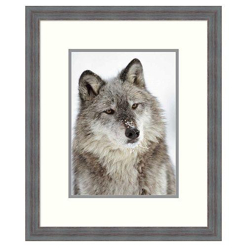 Amanti Art Timber Wolf Framed Wall Art
