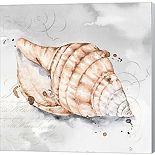 Metaverse Art Blush Shell I Canvas Wall Art
