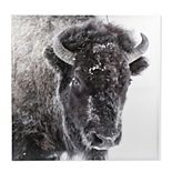 New View Snow Buffalo Canvas Wall Art
