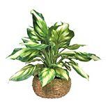 Artificial Hosta Plant