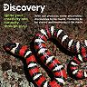 Discovery RC King Snake Remote Control Pet Creature
