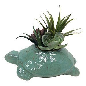 Sonoma Goods For Life® Turtle Artificial Succulent Decor