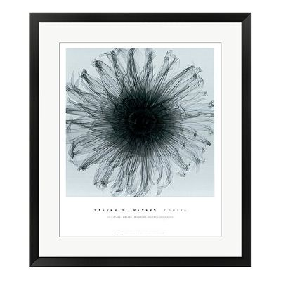 Dahlia Framed Wall Art