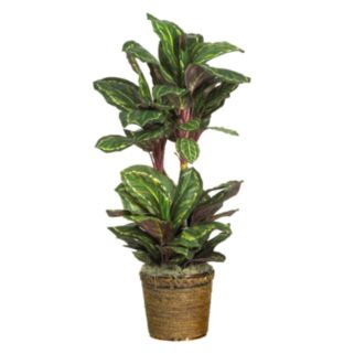 nearly natural Silk Maranta Plant