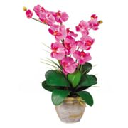 nearly natural Silk Phalaenopsis Orchid Arrangement