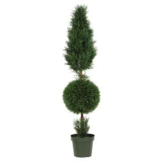 nearly natural Silk Cyprus Topiary