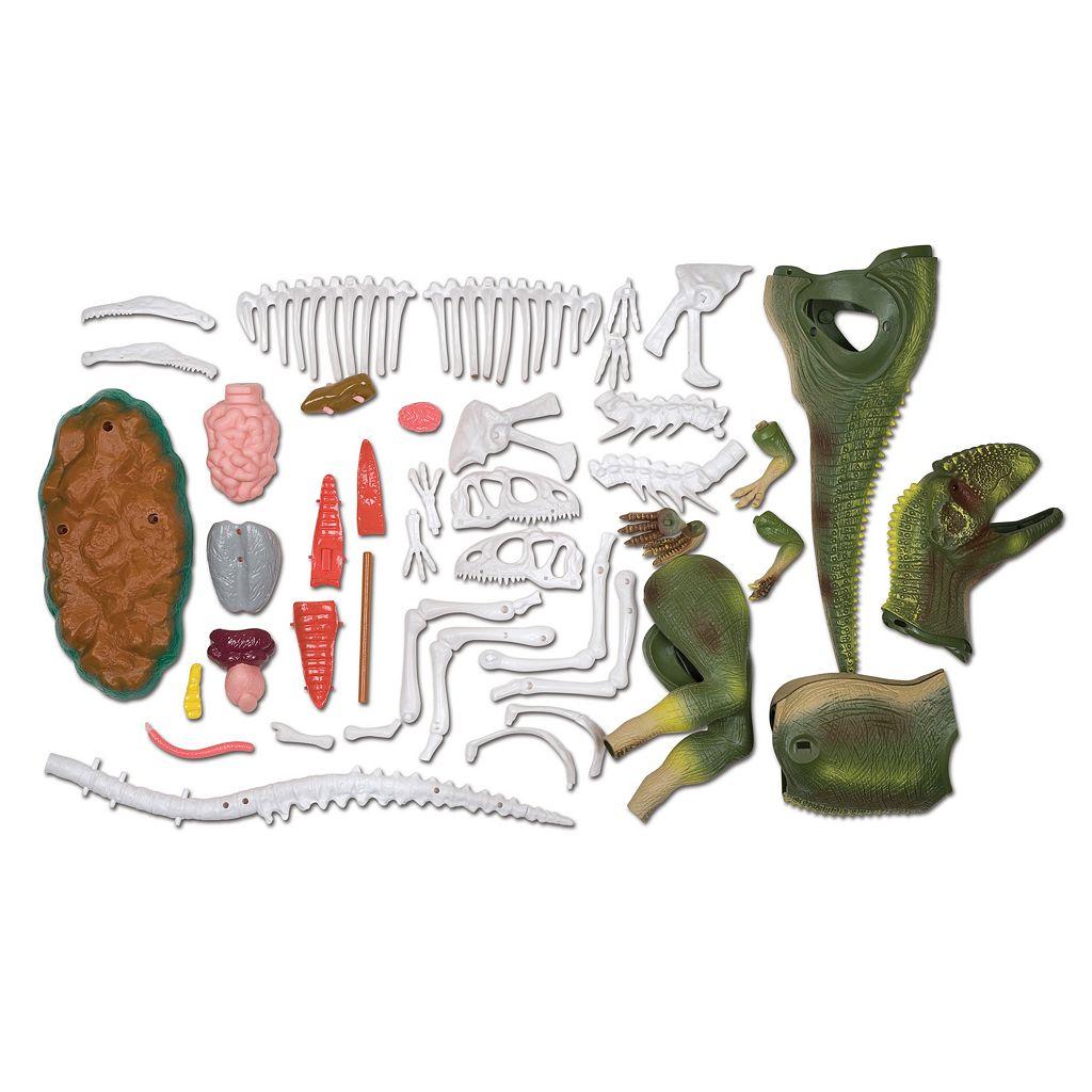 Scientific Explorer Anatomics Dinosaur Set