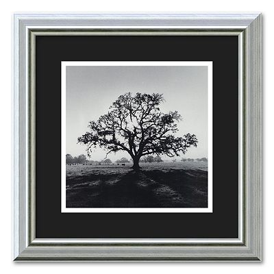 Oak Tree, Sunrise, Northern California, 1966 Framed Wall Art