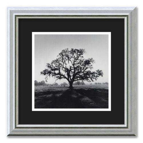 Oak Tree, Sunrise, Northern California, 1966 Framed Wall Art