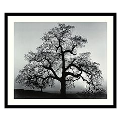 'Oak Tree, Sunset City, California, 1962' Framed Art Print by Ansel Adams