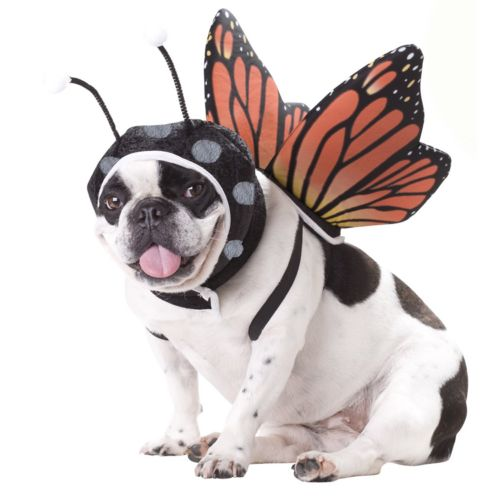 Butterfly Costume - Pet