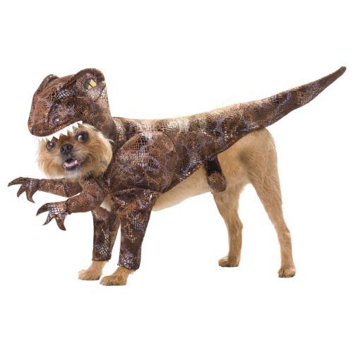 Raptor Costume - Pet
