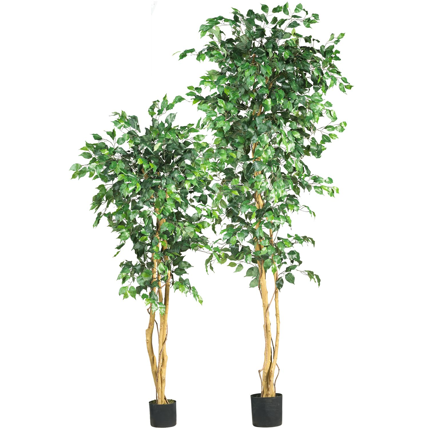 nearly natural silk ficus trees - Ficus Trees