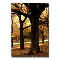 ''Park'' Tree Canvas Wall Art