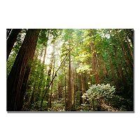 ''Muir Woods'' Canvas Wall Art