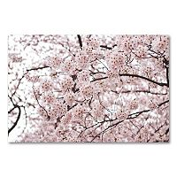 <p>''Cherry Blossoms'' Canvas Wall Art by Ariane Moshayedi</p>