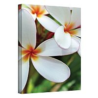 ''White Plumeria'' Canvas Wall Art by Kathy Yates