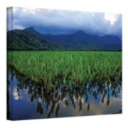 ''Kauai Taro Field'' Canvas Wall Art by Kathy Yates