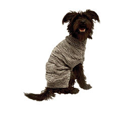 Pet Clothes, Accessories